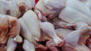 Ayam Potong - pusatdagingayam.blogspot.com