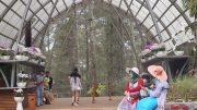 Orchid Forest Cikole - www.destinasibandung.co.id