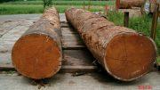 Harga, kayu, merbau, per, batang, batangan, kubik, jual, mahal, jati, jenis, papua, kalimantan, amerika, e-commerce,