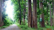 Harga, kayu, jati, per, pohon, meter, kubik, m3, perhutani, harfam, kualitas, tua, furniture, gelondongan, diameter, besar, umur, tahun,
